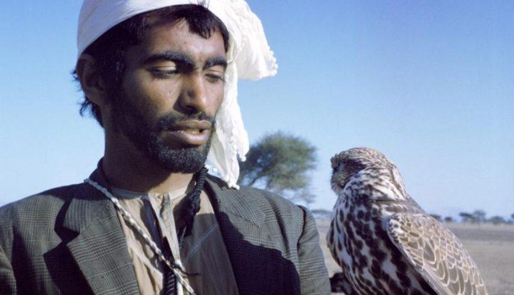 مربي الصقور يحمل صقره بالقرب من العين
