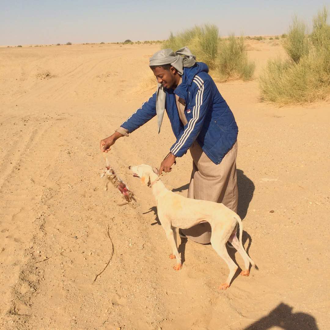 الصيد بالسلوقي في السودان